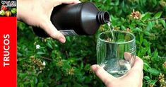 You searched for - Cosas del Jardin Outdoor Cooking Area, Insecticide, Hydrogen Peroxide, Watering Can, Horticulture, Botanical Gardens, Houseplants, Beautiful Gardens, Bonsai
