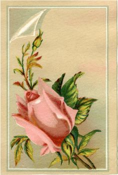 Free Pink Rosebud Download - Pretty! - The Graphics Fairy