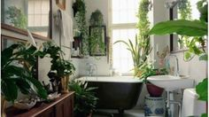 The 5 Best Large Houseplants