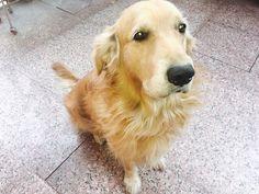 My mannnn 🐶🐾😂 #Pets #dogsarelove #dogs #BIZBoost