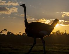 Each night from Saturday 29 June to Saturday 13 July inclusive, Werribee Open Range Zoo is letting you and your family in for a wild and dark evening of adventure! http://www.zoo.org.au/werribee/whats-on/wild-nights