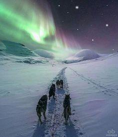 Dog Sledding under The Northern Lights Camping Car France, Camping 3, Lofoten, Aurora Sky, Destinations, Parcs, Land Scape, Norway, Northern Lights