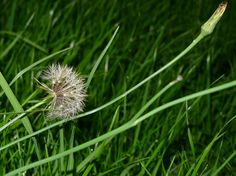 Managing weeds in the garden is not one of our favorite things to do  it's more like a necessary evil. Get tips for managing weeds in the garden from the following article.