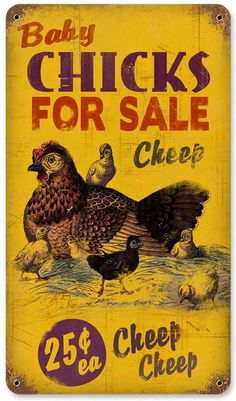 Retro Chicks for Sale Tin Sign 8 x 14 Inches, $35.97 (http://www.jackandfriends.com/retro-chicks-for-sale-tin-sign-8-x-14-inches/)