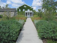 Native Plants, Walks, Perennials, Beds, Sidewalk, Landscape, Garden, Scenery, Garten