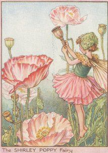 antique Shirley Poppy Flower Fairy print