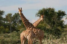 Kruger Park 2005