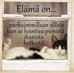 Helmiä elämäni ketjuun: Elämä on. Cat Quotes, Work Quotes, Life Quotes, Finnish Language, Motivational Quotes, Inspirational Quotes, Mind Power, Positive Vibes Only, Enjoy Your Life