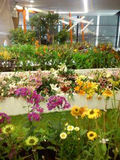 FLORA Flora, Plants, Plant, Planting