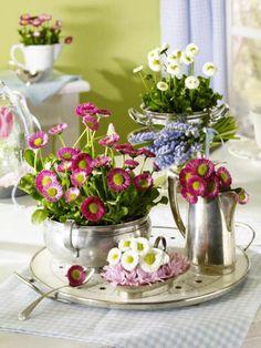 Kleine Blüten mit großer Wirkung: Bellis kündigen mit Ihren zerbrechlich wirkenden, pinken Blüten den Frühling an.