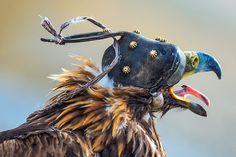 Golden Eagle Festival in Mongolia 06