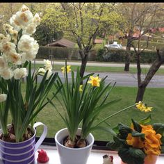 Happy Easter from Vienna! Vienna, Happy Easter, My Love, Plants, Easter, Flowers, Happy Easter Day, Flora, Plant
