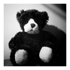 Monwa - the black bear who was too cute to be ignored in a gift shop in Canada Mug Shots, Black Bear, Old Friends, Teddy Bear, Canada, Toys, Cute, Shop, Gifts