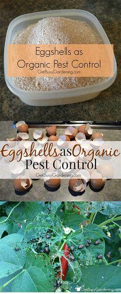 Diy: Eggshells as Organic Pest Control