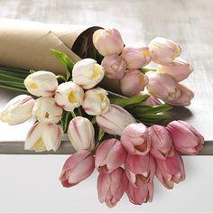 Tulip Bundle, Set of 3