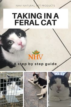 There's no question that our cats are full-fledged family members. Cat Care Keeping Your Cat Healthy Ideas. Feral Cat House, Feral Cat Shelter, Feral Kittens, Cats And Kittens, Kitty Cats, Baby Kittens, Cat Shelters For Winter, Cat Care Tips, Pet Care