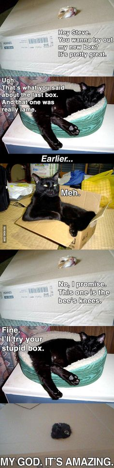 Funny pictures about Cats Try A New Box. Oh, and cool pics about Cats Try A New Box. Also, Cats Try A New Box photos. Humor Animal, Funny Animal Memes, Cute Funny Animals, Funny Animal Pictures, Funny Cute, Cute Cats, Funny Memes, Funny Pics, Funny Kittens