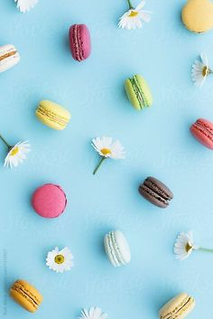 Macaron and daisy background by Ruth Black for Stocksy United - Macarons Tumblr Backgrounds, Simple Backgrounds, Flower Backgrounds, Wallpaper Backgrounds, Macaron Wallpaper, Daisy Wallpaper, Cool Wallpaper, Cute Background Pictures, Daisy Background