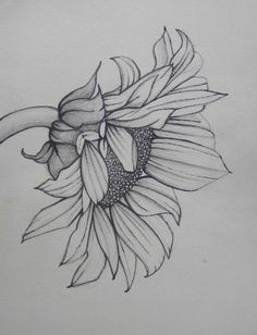 Pencil Art Work Sunflower Mixed Media Original Drawing-Print - Health and Fitness - Kunst Sunflower Drawing, Sunflower Tattoos, Sunflower Art, Sunflower Sketches, Plant Drawing, Painting & Drawing, Drawing Drawing, Watercolor Painting, Painting Tattoo