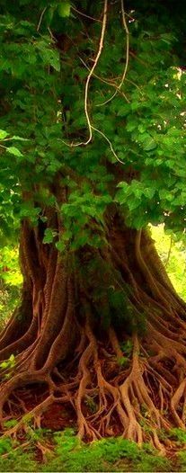 beautiful tree