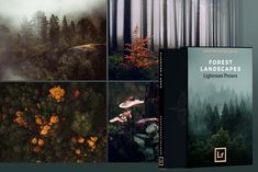 FREE Dark Moody Lightroom Presets by Northlandscapes Aerial Photography, Landscape Photography, Nature Photography, Photography Editing, Forest Landscape, Abstract Landscape, Winter Landscape, Edit My Photo, Autumn Forest