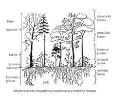 SPOLEČENSTVA LESŮ Science And Nature, Mists, Moose Art, Diagram, Notes, Map, Education, World, Plants