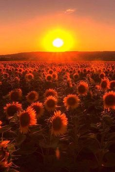 Beautiful sunset in a sunflower field in Zsambek,Hungary Beautiful Sky, Simply Beautiful, Beautiful World, Beautiful Flowers, Sunflower Fields, Belleza Natural, Ciel, Pretty Pictures, Mother Nature