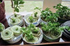 Visste du att det går att återodla dina vanligaste grönsaker från resterna som blir över? Det är ett roligt sätt att odla med barnen på fönsterbänken, och även ett sätt att spara både pengar och onödigt avfall. Tipsen har jag hittat på olika bloggar där många blir förvånade hur enkelt det är och undrar om
