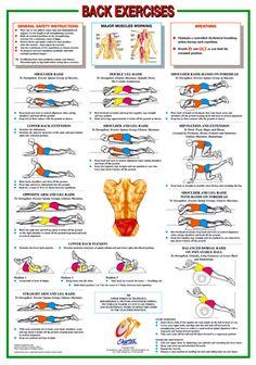 Back Exercises Wall Chart Poster - Chartex Ltd. (UK)