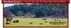 SonRise Ranch Store | Grass-fed Beef, True Free Range Pork, Lamb and Chicken -- Meat co-op
