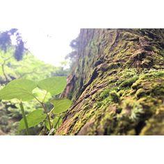 【yamamotodadada】さんのInstagramをピンしています。 《木の葉と苔と。 深い優しい緑と茶色。  #木 #苔 #葉 #森》