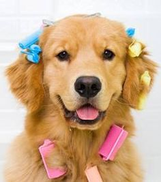 These 12 dogs were groomed to look like other animals by their come get your pooch all dolled up at woof gang bakery jacksonville nc solutioingenieria Images