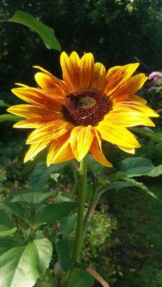 Sonnenblume was bl ht im herbst pinterest for Kleine fliegen blumen