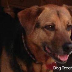 Peanut Butter Dog Treat with Safflower Oil