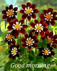 Good Morning Beautiful Flowers, Good Morning Images Flowers, Good Morning Roses, Good Morning Beautiful Quotes, Beautiful Rose Flowers, Flowers Nature, Amazing Flowers, Purple Flowers, Colorful Flowers