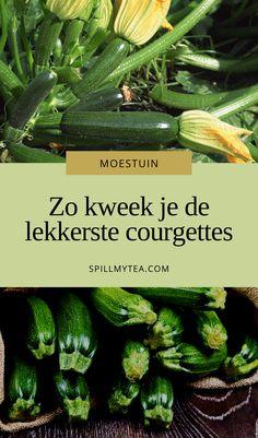 Herb Garden, Vegetable Garden, Autumn Garden, Green Plants, Gardening Tips, Zucchini, Vegetables, Decoration, Garden