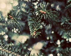 Pine Tree Photograph, Winter Art, Holiday Decor, Deep Green, Christmas Tree Photo, Woodland, Nature Photography, Forest Green on Etsy,