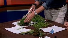 Does it seem like you are always heading to the nursery to buy more plants? Gardening guru Linda Vater has become a pro at propagating her own plants, so today she stopped by to show us how. Check ...