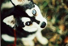 Puppy :D