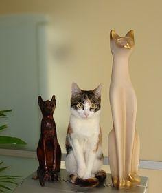 incognito #cat