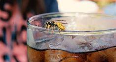 Wie du Mücken, Wespen und andere Insekten fern hältst