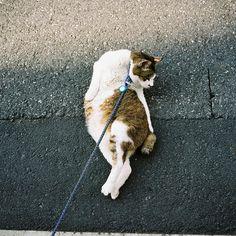 Untitled, via Flickr.  nee nee nee , als je een beest aan een lijntje wil moet je een hond nemen!!!