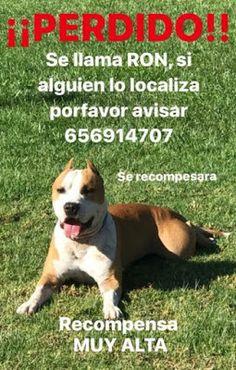 """Rumbo A Sirio: Perdido en Benaguacil (Valencia) """"Recompensa"""""""
