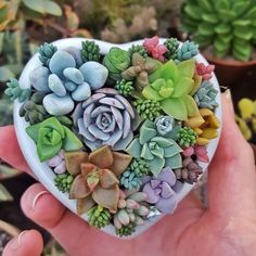 Growing Succulents, Succulents In Containers, Cacti And Succulents, Planting Succulents, Cactus Plants, Garden Plants, Planting Flowers, Indoor Plants, Succulent Gardening