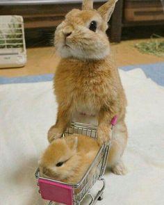 Pazardan tavşan aldım