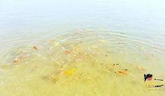 Look at the lovelies in the lake  #travel #travelblog #traveldiaries #igers #iphoneonly #instapic #instatravel #traveldiary #travelgram #travelpost #traveltheworld #wanderlust #wanderer #winterholidays #travelblogger #traveluae #dubaitravelblogger #dubai #dubaipage #mydubai #uae #inuae #india #theshazworld #alqudralake #alqudra #bbq