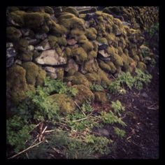 Mossy wall in the Lake District!