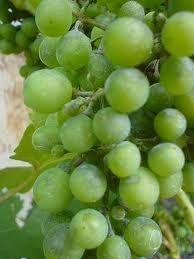 Resultado de imagen de Albalonga (uva)