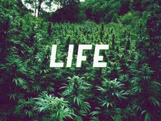 Life♥