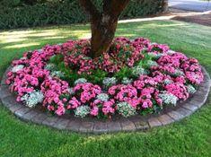 Landscaping Around Trees, Front Yard Landscaping, Landscaping Ideas, Backyard Ideas, Rustic Landscaping, Landscaping Melbourne, Mulch Landscaping, Flower Landscape, Landscape Design